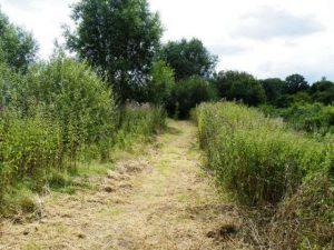 Wetlands2014July1